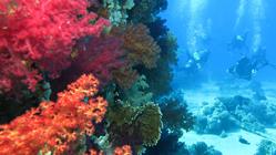 """Сафари удалось! Читайте первую часть рассказа о наших приключениях на """"Ocean Dream"""" с 28.09 по 05.10 по северу Красного моря :)."""