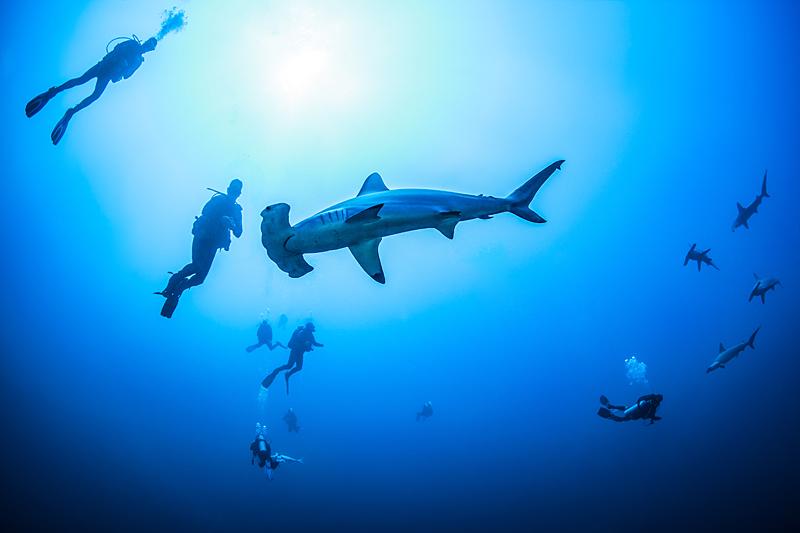 Сафари за акулами на Aldebaran, Маша+Саша, сентябрь 2016 года