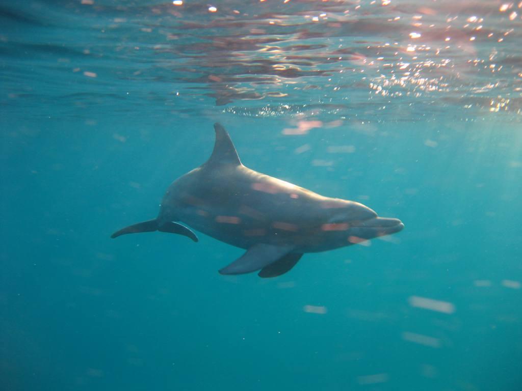 Сафари на Ocean Dream, майские 2015. Отзыв Димы Тараненко & сына :-)